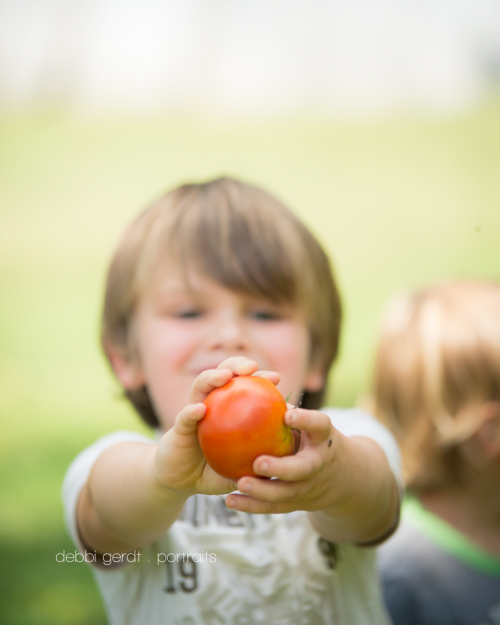 garden tomatoes photography pictures Athens TN