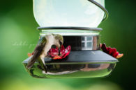 hummingbirds Cleveland Athens Knoxville Tennessee photographer photography
